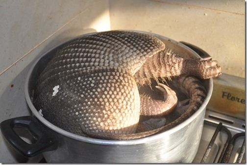 armadillo in a cooking pot