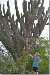 Joni and cactus