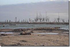 Miramar shoreline