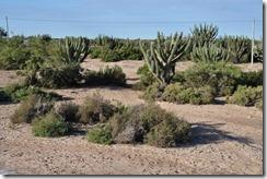 arid land