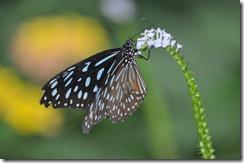 butterfly on stalk