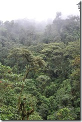 Forest at Mindo