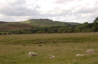 Peak District hills and sheep