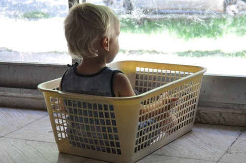 Joni in washing basket