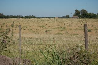 cut barley fields