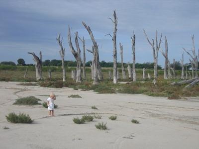 dead trees on the shoreline