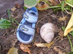 Giant snail with Joni's shoe